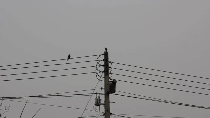 Stock video of bird sitting on the wire of | 9538868 | Shutterstock