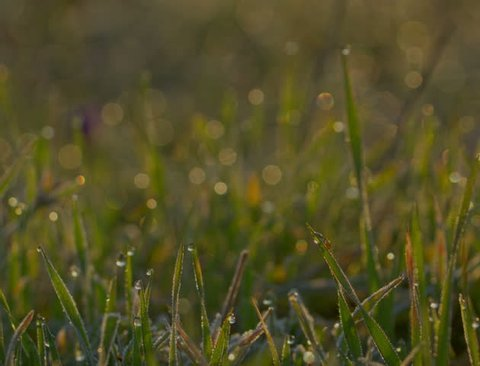 Blurred Grass With dew Water Drops. HDR RAW Shot With Motorized Slider.