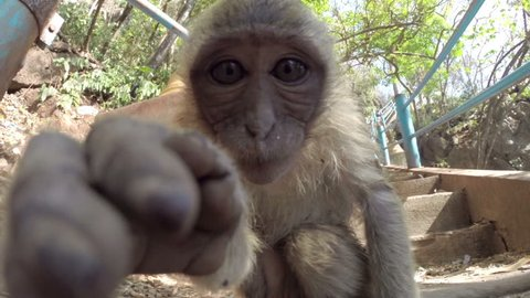 Wild monkey looking into and touching a camera