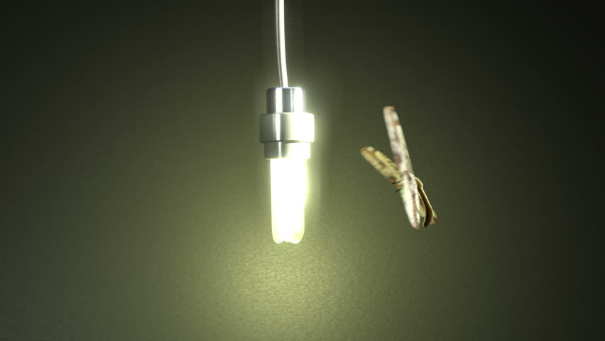 Moth To The Flame A Moth Or Butterfly Flying Around An Energy ...:Moth To The Flame A Moth Or Butterfly Flying Around An Energy Saving Light- bulb With Matte Stock Footage Video 978715 - Shutterstock,Lighting
