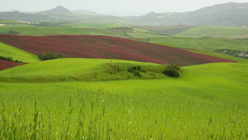 Landscape, grass swaying in the breeze, green hills of Tuscany, Italy. #9837968