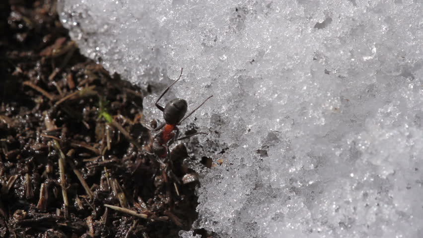 Ants at spring on anthill #9915608