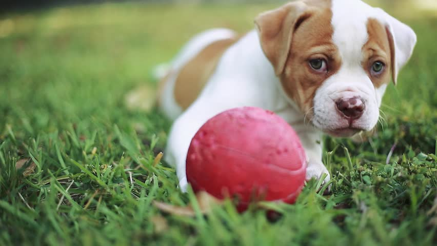 Download Bulldog Ball Adorable Dog - 3  You Should Have_205035  .resize(height:160)